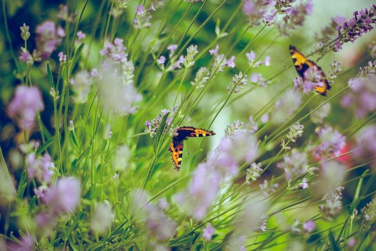 Faites de votre jardin un écrin de bonheur